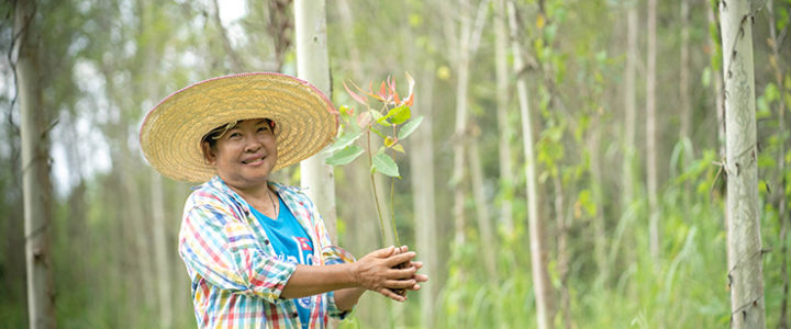 Double A Paper Grows over 500,000 trees with help of farmers in Thailand.