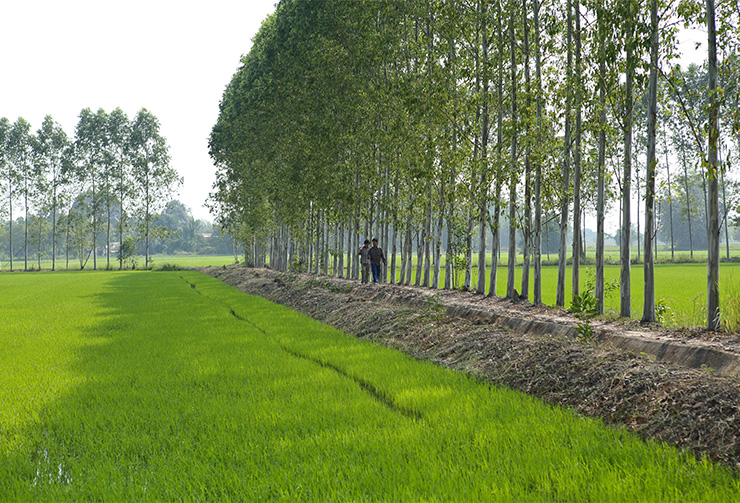 Double-A-grows-trees-with-the-help-of-over-farmers-Thailand